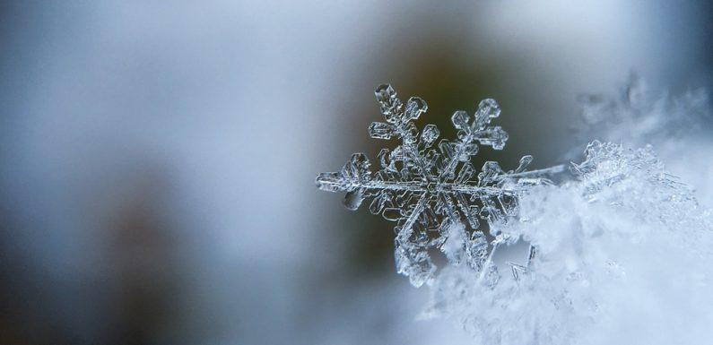 AUDIO. «Minute Papillon!»: Forme des flocons de neige et nouveaux «bébés OGM»