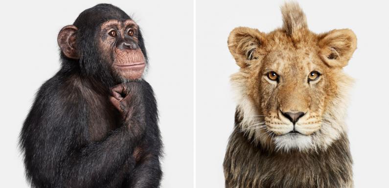 Ce photographe capture la personnalité des animaux avec des portraits minimalistes et saisissants