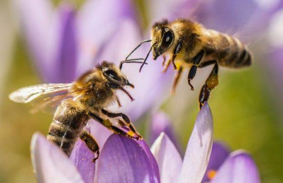Pyrénées : un apiculteur s'apprête à poster 60 000 lettres partout dans le monde pour sauver les abeilles