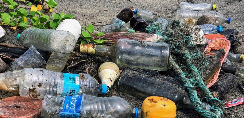 Trashtag Challenge, un défi pour encourager le ramassage d'ordures