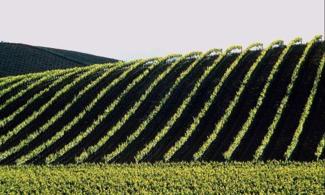 Comment le GIEC malmène l'agriculture bio