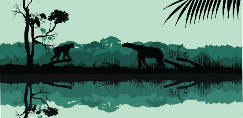 Comment la vie a repris après la disparition des dinosaures