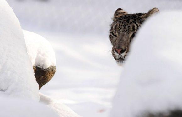 Sylvain Tesson : «Le face-à-face avec l'animal, c'est la véritable expérience de l'Altérité»