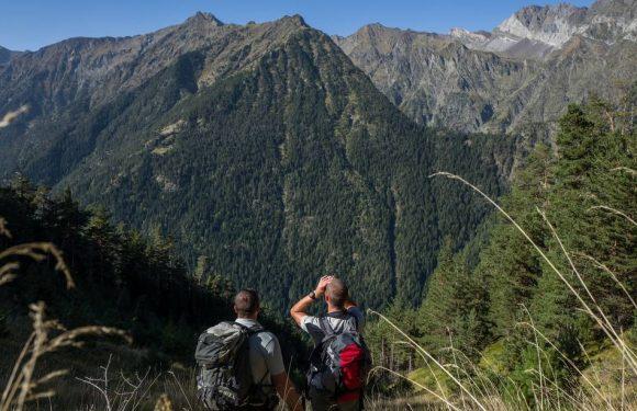 VIDEO. Nous sommes partis sur les traces des ours dans les Pyrénées