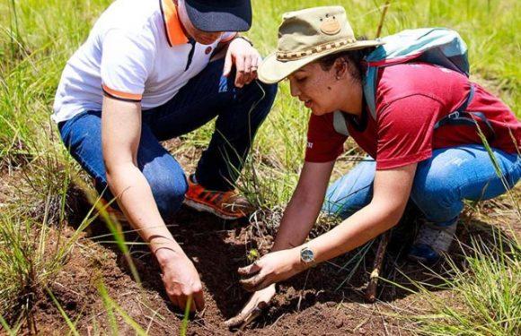 [Certifié sans Coronavirus] Madagascar fête son indépendance en plantant 60 millions d'arbres